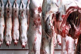 carcasses de cochons dans une chambre froide