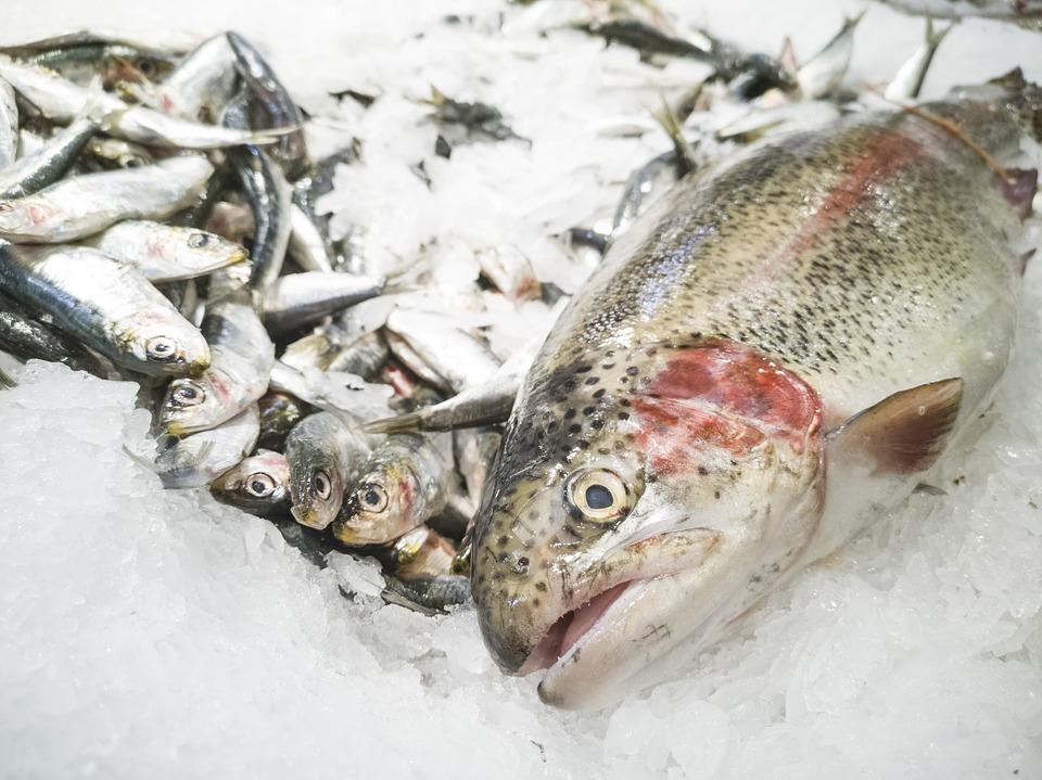 poissons congelés en vente